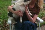 Remembering Brenda Harris, a Beloved Dogster Community Member