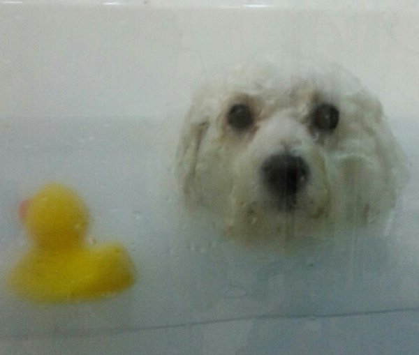 Celebrate National Bubble Bath Day With These Instagram Pups in Tubs!