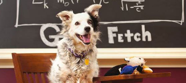 Which Dog Breeds Make the Smartest Dogs?
