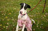 DIY Doggie Sweaters: Create Custom Apparel for Cheap