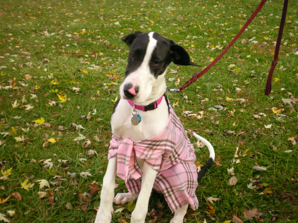 DIY Doggie Sweaters: Create Custom Apparel for Cheap