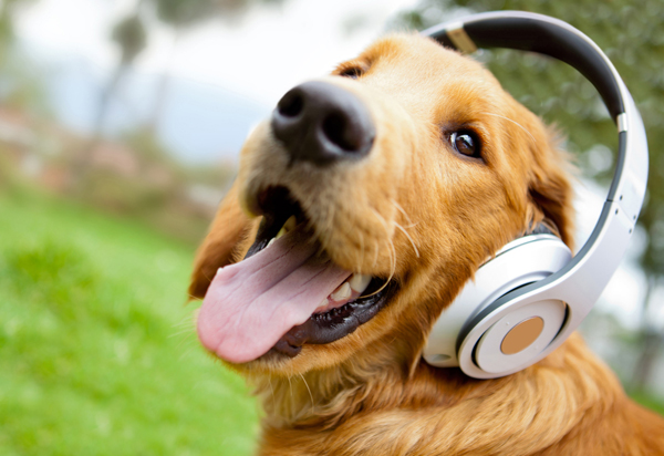 This is the best playlist Dog