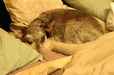Let's Talk: Does Your Dog Hog the Human Bed?