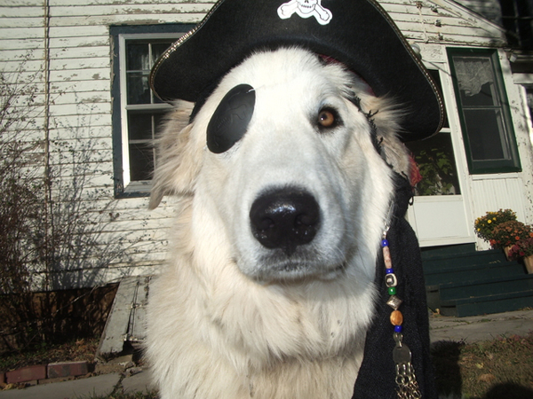 Avast, Ye Hearties: It's Bark Like a Pirate Day!
