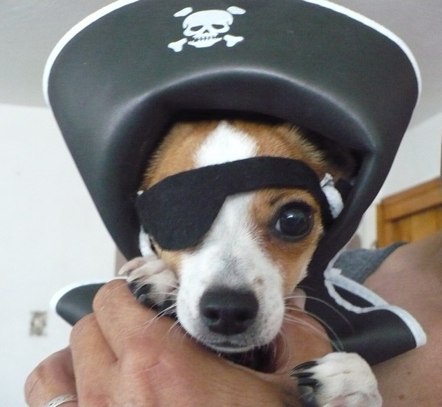 Yarr, Dogsters! It's Bark Like a Pirate Day!