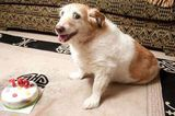 A Fond Farewell to Daisy, Who Was the Oldest Dog in the UK