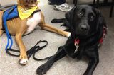 Dexter the Therapy Dog Helps Victims of the Boston Marathon Terrorist Bombing