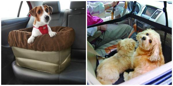 Podróż psa samochodem