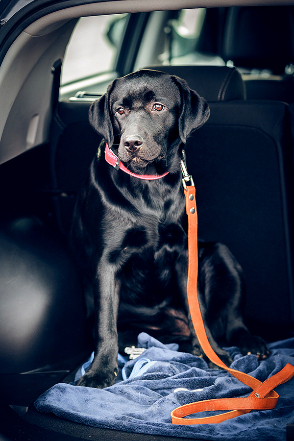 How Not to Be Gross: Cleaning Your Car of Doggie Grime