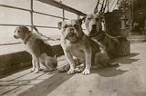 A New Exhibit Celebrates the Dogs of the RMS Titanic