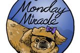 Our Monday Miracle is Billie Valentine: Chihuahua and Katrina Survivor