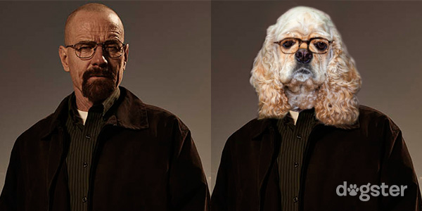 """42a4a43884579 Walter White (played by Bryan Cranston) is the """"hero"""" of the series. He s a  former high-school chemistry teacher who got lung cancer and started  cooking ..."""