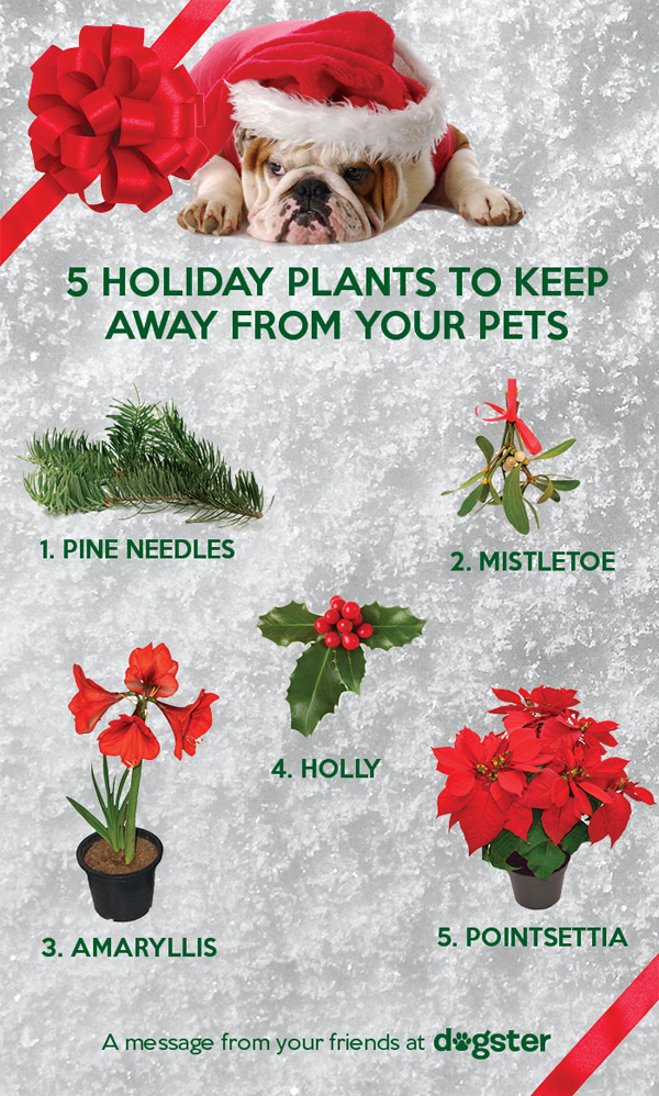 5 Toxic Vegetation for Canine to Watch Across the Holidays