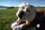 8 Ways to Get Your Dog Stolen