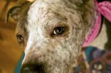 Help Save Dottie, an Abused and Abandoned Dog in Brooklyn