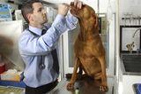 Dr. Doug Kramer, Pot Advocate for Dogs, Dies at 36