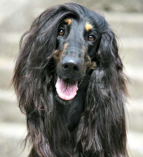 cool hound dog names