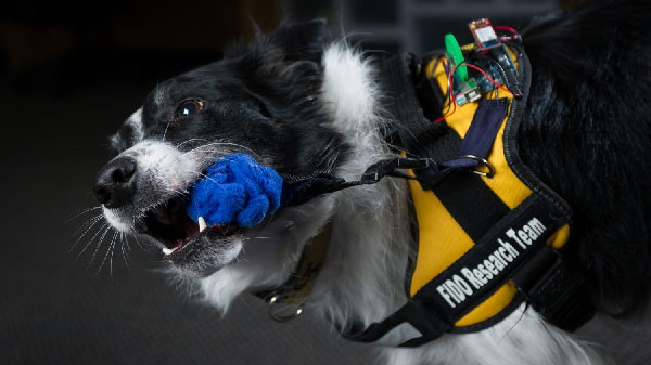 Can This Interactive Vest Expand the Uses of Service Dogs Even Further?