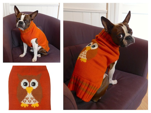 Our New Favorite: Dog Apparel and Accessories from Fab Dog