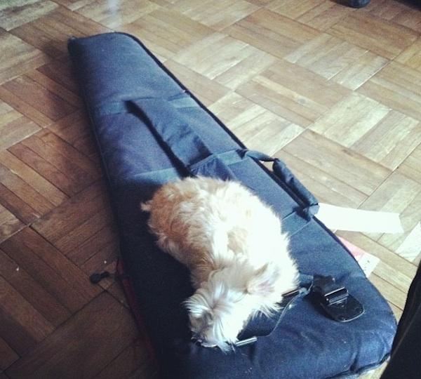Marnie Stern's Dog, Fig, Leads a High-Profile Rock Star Life