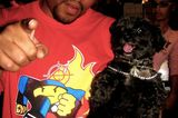 R.I.P. General French Fry, the Boot Camp Clik's Beloved Terrier