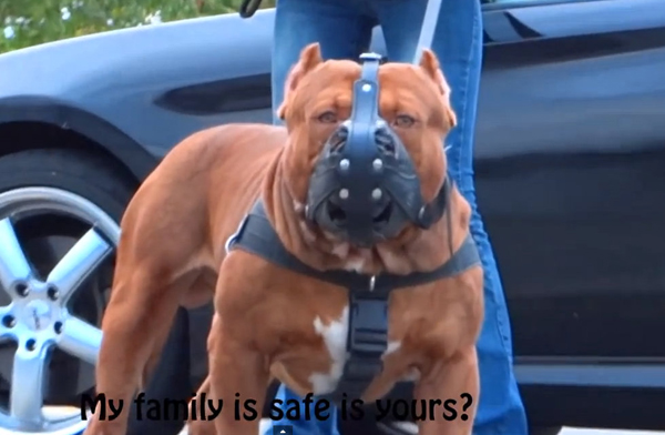 Positive stories about a 175 pound pit bull only damage the an image from dark dynasty k9s promotional video even if this was a pit bull would this be a positive image voltagebd Choice Image