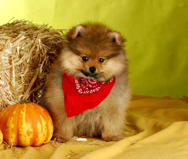 The Top 10 Dog Names Associated with Halloween