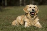 5 Tips to Avoid Getting a Service Dog Who's a Dud