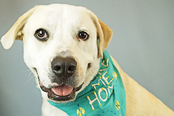 Having a Stressful Week at Work? Order Up Some Adoptable Dogs