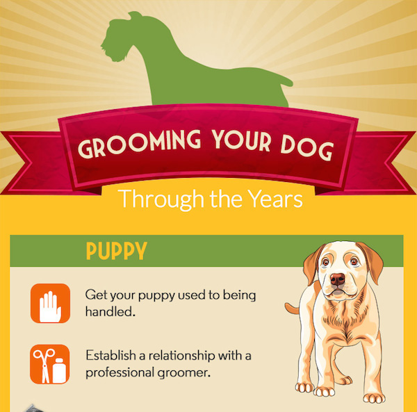 Dog grooming dogster grooming your dog from puppy to senior solutioingenieria Gallery