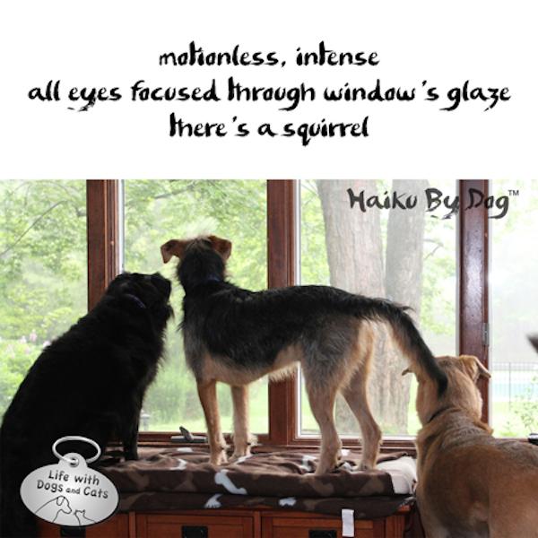 5 Ways Doggy Poets Celebrate International Haiku Poetry Day