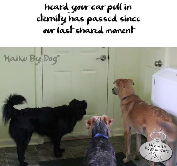 Haiku by Dog: How Could You Leave Without Us?