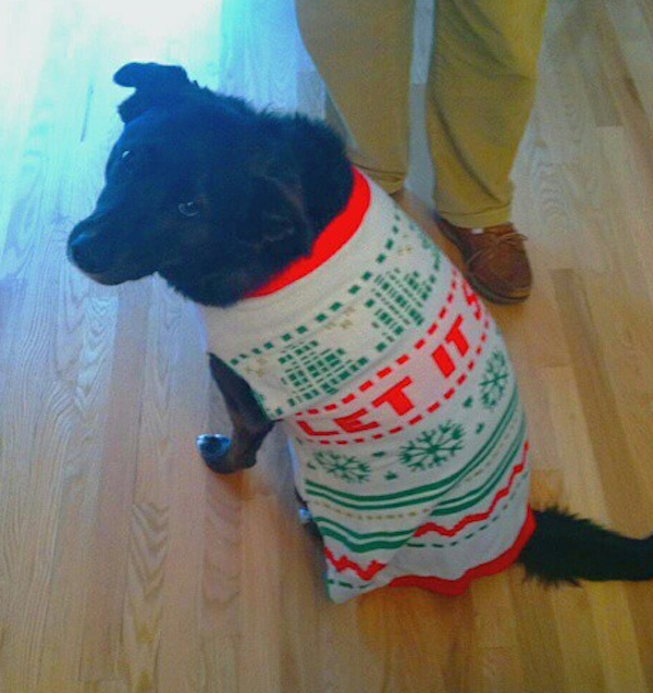 Check Out These Dogs In Their Ugly Christmas Sweaters on Instagram!