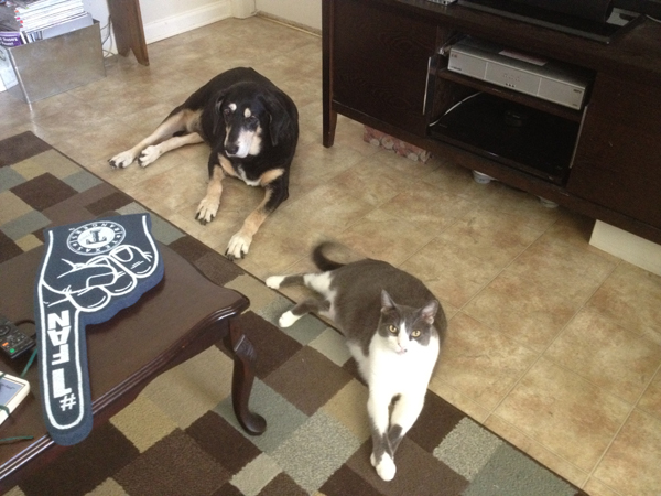 Living with Cats and Dogs: Is It a War Zone? Try a WEIRD Zone!