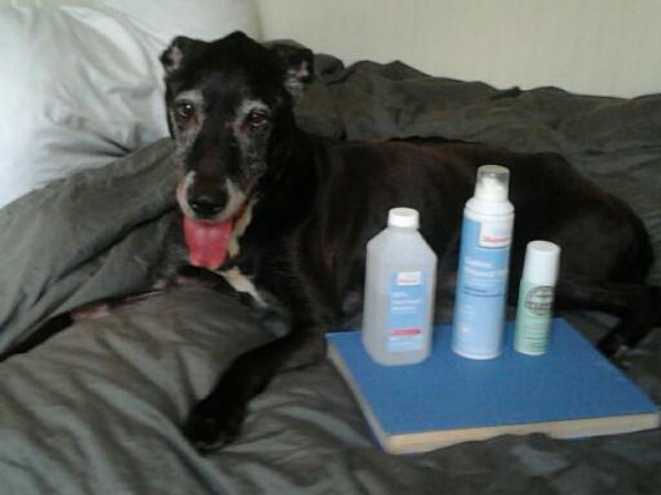 What you'll need to treat an abscess on a dog at home.