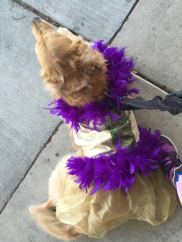 Our Lily in her Barkus costume. (All photos by Eileen McClelland) & I Dressed Up My Dog for the Mardi Gras Barkus Parade