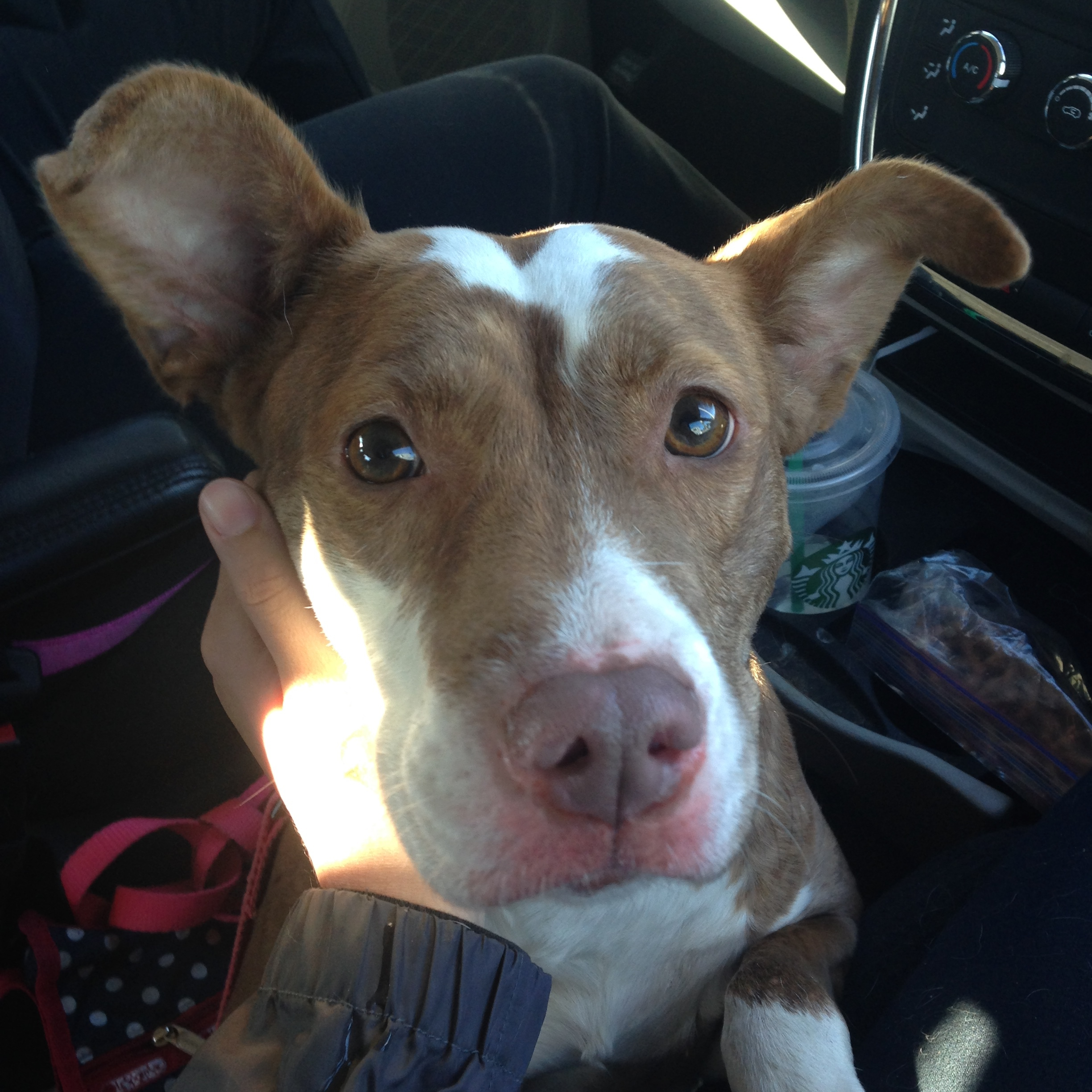 I Was Accused of Larceny When I Rescued a Lost Dog