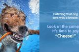 """Win a Copy of Seth Casteel's Book """"Underwater Dogs: Kids Edition"""""""