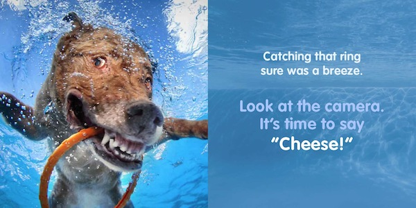 "Win a Copy of Seth Casteel's Book ""Underwater Dogs: Kids Edition"""