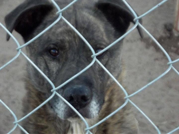 Dogs in a Washington Shelter Had It as Bad as Critics Alleged