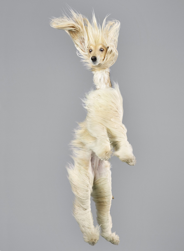 Look at Julia Christe's Photos of Dogs Flying