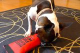 And Now, We Bring You a Durable Dog Toy Showdown