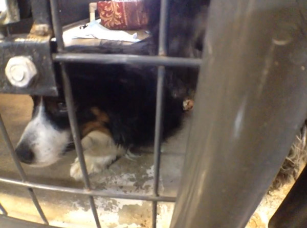 50 Dogs Rescued From Decrepit Puppy Mill in Wisconsin
