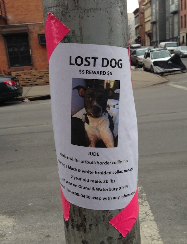 7 Dos and Don\'ts for Making a Lost Dog Flyer