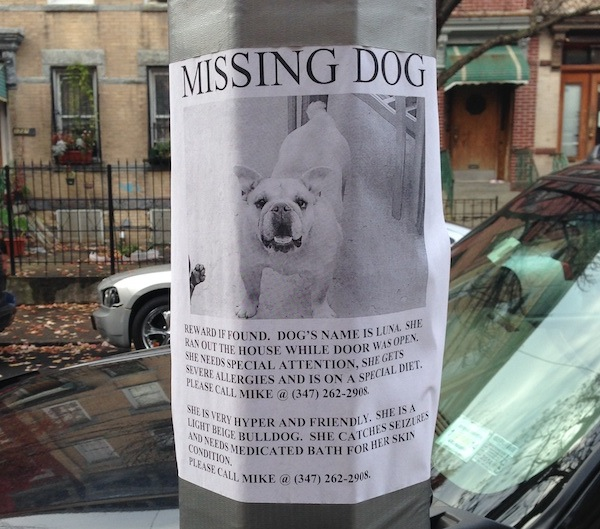 7 Dos And Don'Ts For Making A Lost Dog Flyer