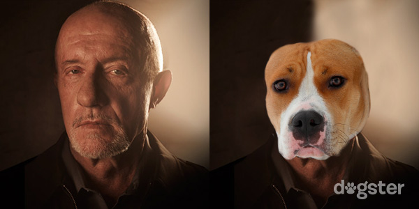 The Dogs of Breaking Bad