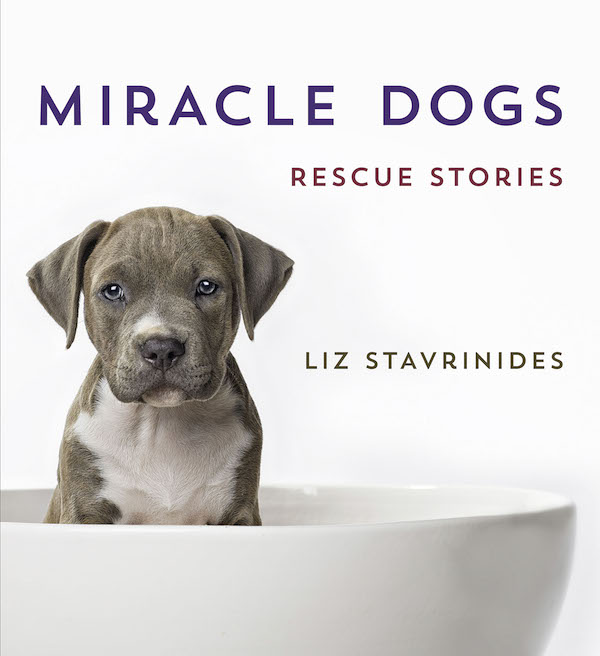 """Hoda Kotb, Chevy Chase, and Lance Bass Star in """"Miracle Dogs"""""""