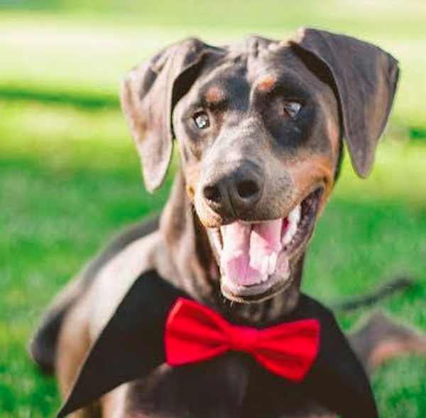 The 12 Dogs of Christmas: Misfit the Blind Doberman