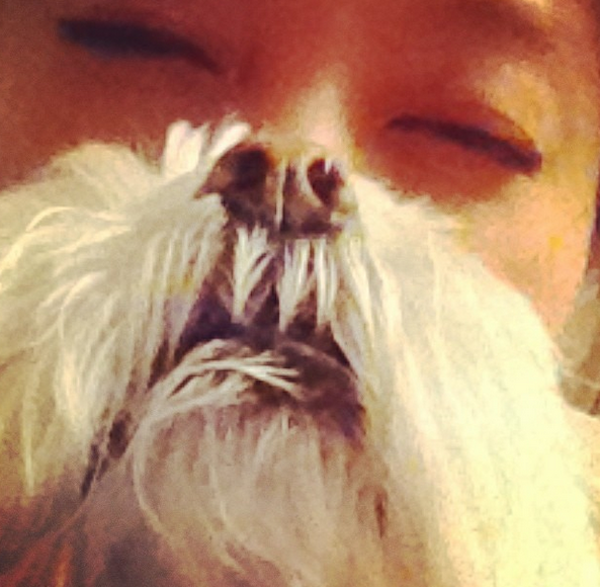 10 Dogs With Mustaches to Celebrate Movember