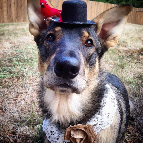 Celebrate National Mutt Day With These Proud Instagram Pups!